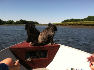 Enjoying a boat ride, Ava & Sage on the Essex River