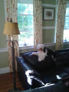Oliver, in Princeton
