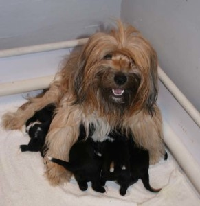 Izzie smiling, nursing her black & white babies