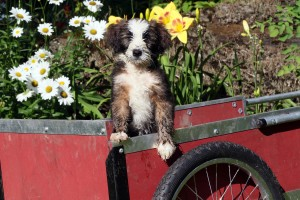 Kensington Dogs August 9 2016 103