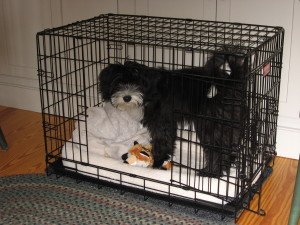 Ziggy, at home in his crate