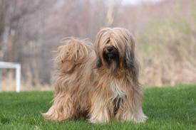 Kensington Dogs April10 012_972 x 648