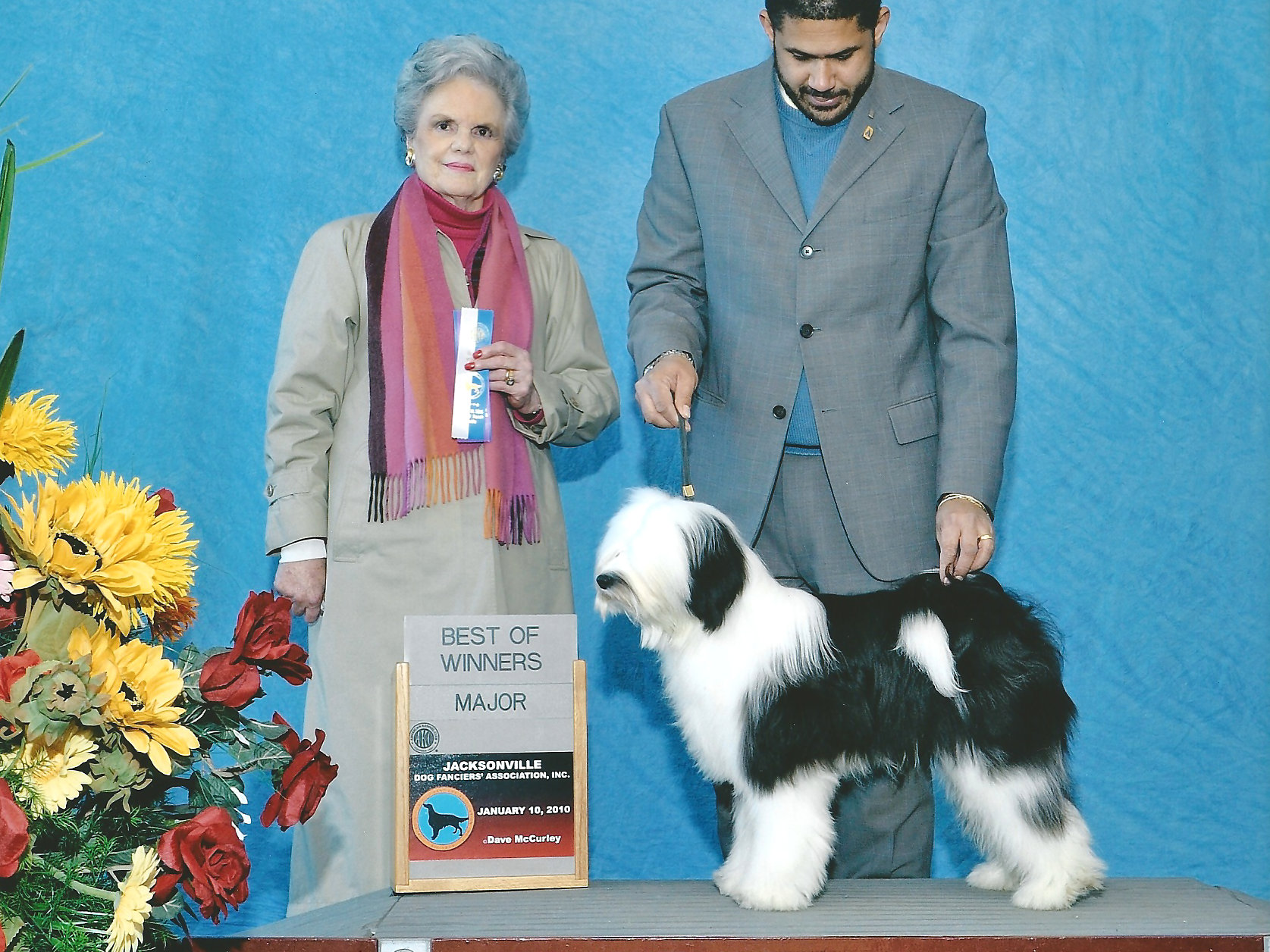 GRCH Kensington's Oliver Twist, winning his AKC Championship title at nine months of age.