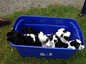 091215 A bin full of puppy love