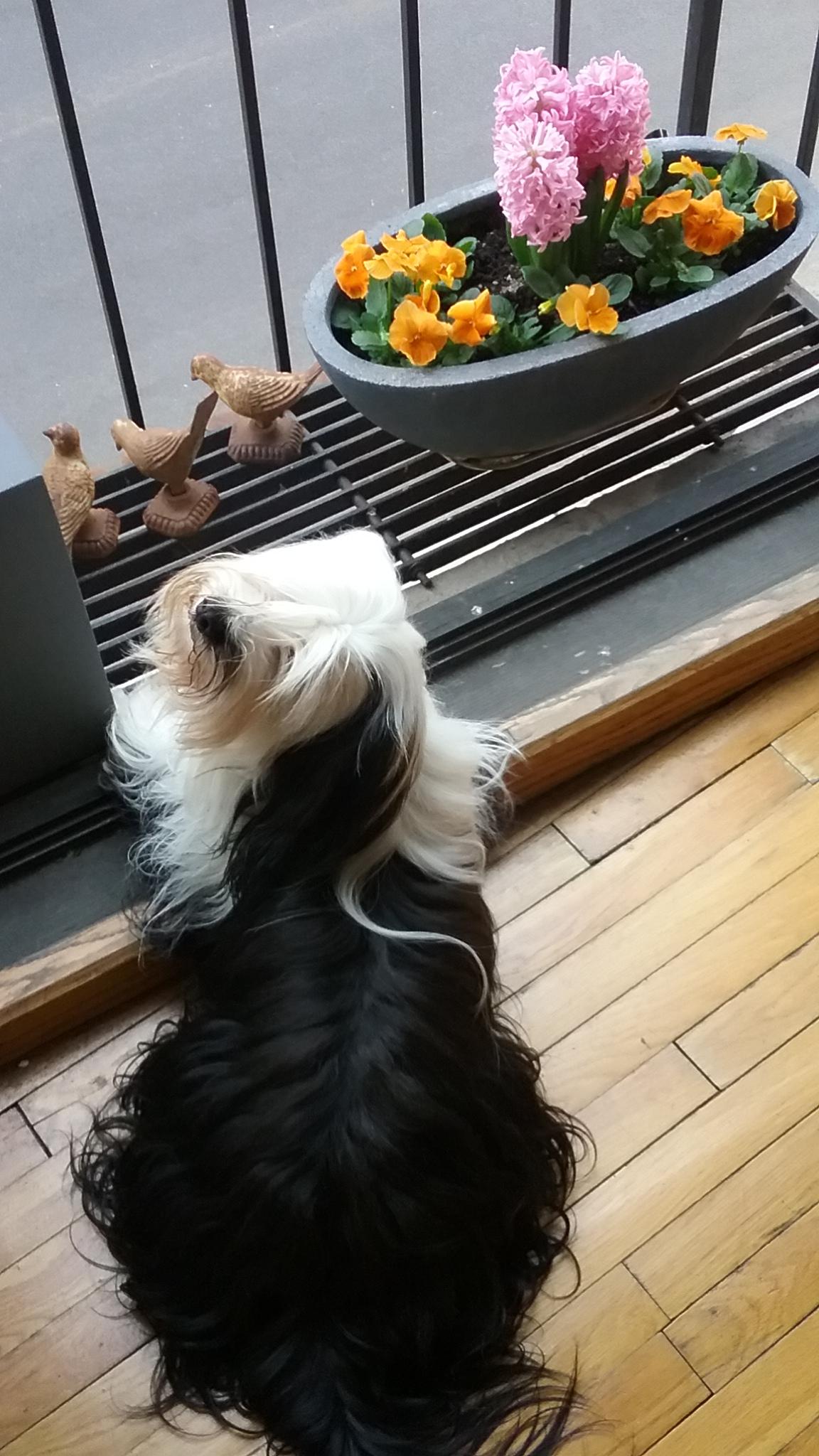Oliver at Tecces