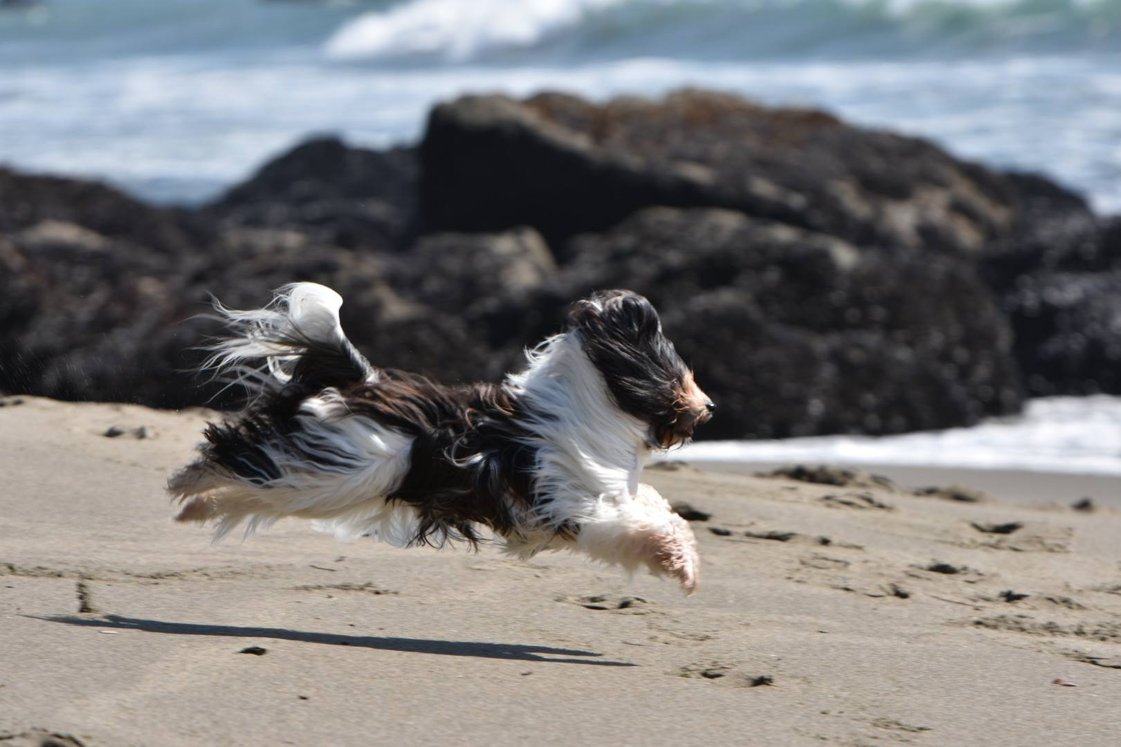 Tessa in flight