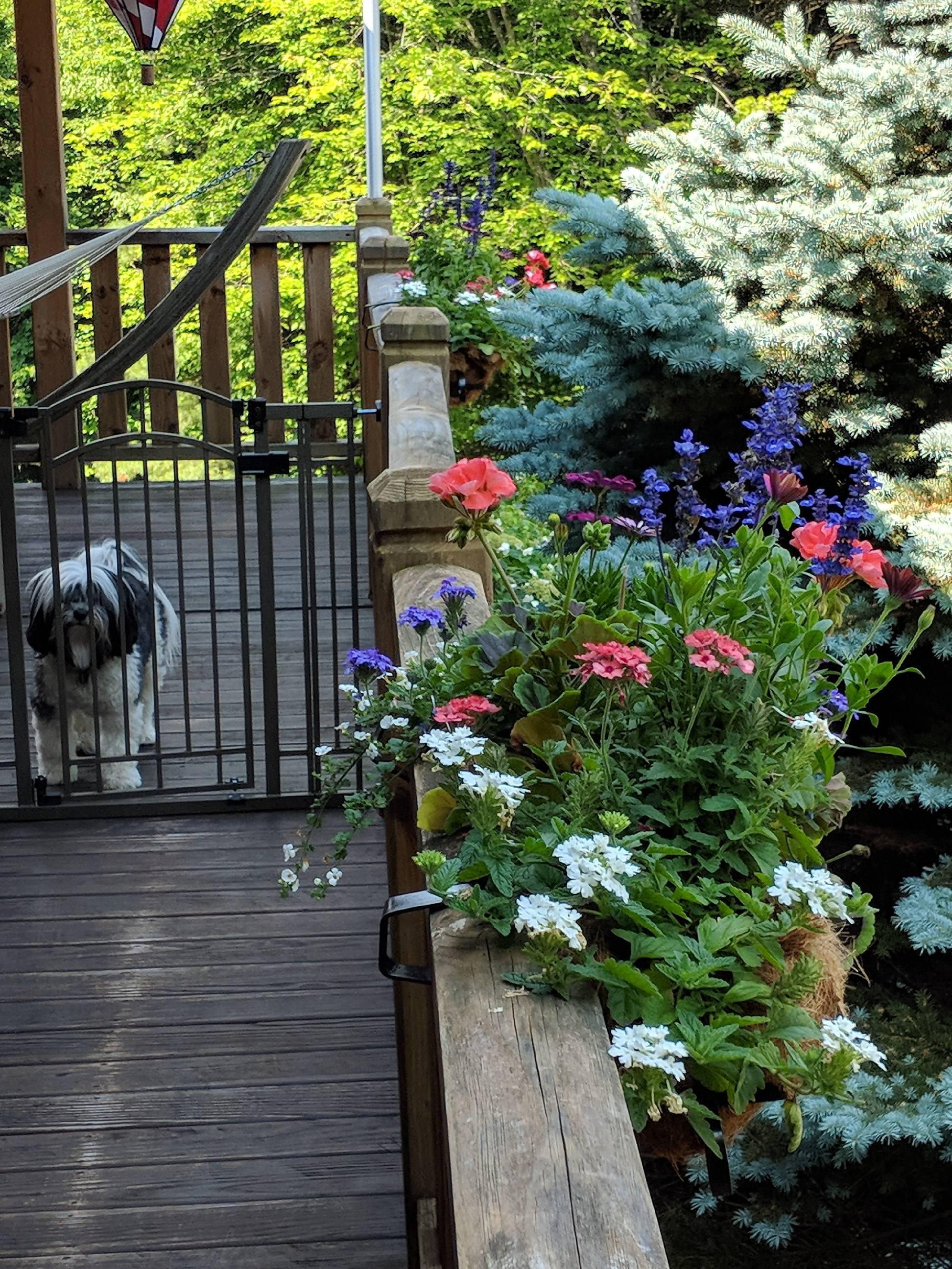 Yogi in summer 2018
