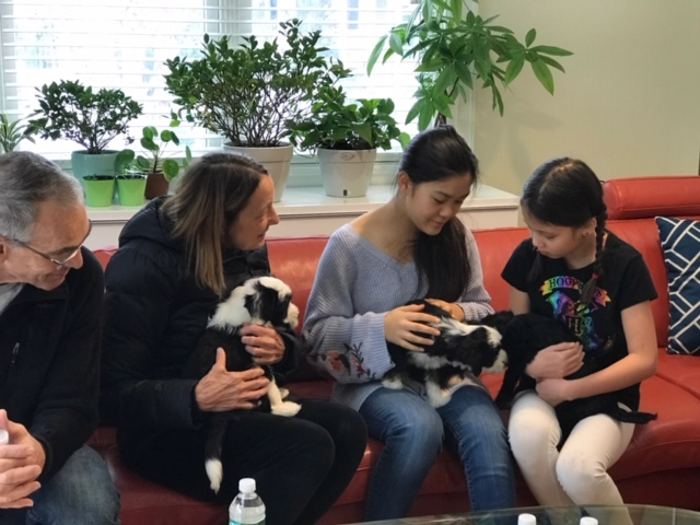 Puppy play date 113018